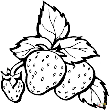 Small Picture Strawberry coloring pages Free Coloring Pages