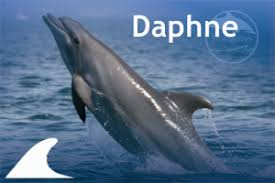 adopt a dolphin from the slovenian sea a wonderful gift for the holidays