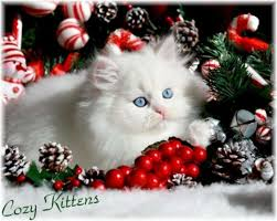 126 best Christmas KIttens/Cats Wallpaper images on Pinterest ...