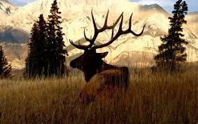 Deer Animals Nature Hd Wallpaper Free High Definition Wallpapers