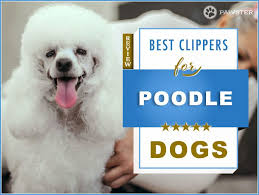 6 best dog hair clippers for poodles