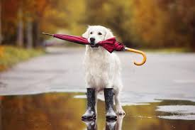 5,462 Dog Rain Photos - Free & Royalty-Free Stock Photos from Dreamstime