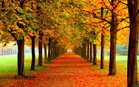 Fall Scenes Wallpapers - Top Free Fall ...
