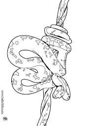 Small Picture Amazonian tree boa coloring pages Hellokidscom