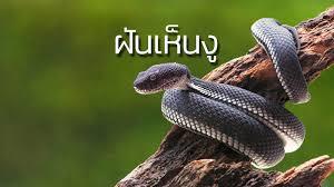 ฝันเห็นงู ทำนายฝันเห็นงู