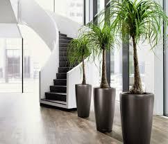 modern office plants. Modern Office Plants D