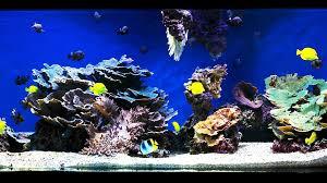 How To Aquascape A Saltwater Aquarium | Aquarium Care - YouTube