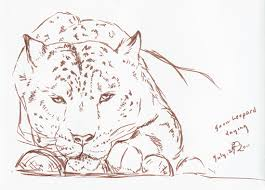 Sketches Animal Journey Of Art Animal Sketches