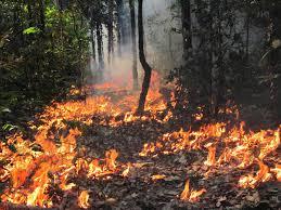 Image result for agosto 19 arden cientos de hectareas en el amazonas