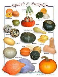 Gourd Identification Chart Pumpkin Squash Varieties Chart Squash Varieties Pumpkin