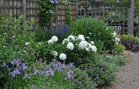 how to grow perennials gardener s supply