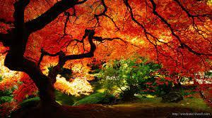 Fall Desktop Background Themes Windows ...