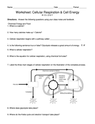 Unit 2 Photosynthesis Worksheet Answers Fill Online