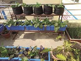 rooftop gardening thrives during lockdown