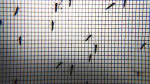 Hindistan'da 14 kişide Zika virüsü görüldü - Son Dakika Haberleri