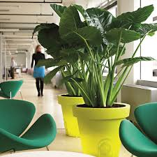 office greenery. Over Their 40 Years, The Team At Plant Plan Has Seen Many Cases Of Improved Health And Staff Morale After Introducing Plants Into Office Interior. Greenery S