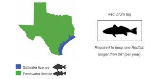 Texas Fish Chart Planning To Buy A Texas Fishing License Heres What You