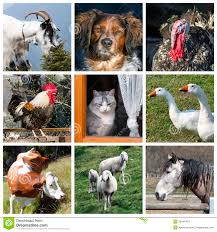 real farm animals collage. Delighful Animals Animals Farm Collage Throughout Real Farm Collage S