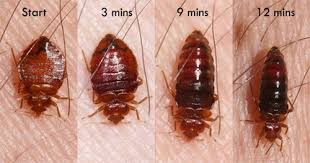 Kingwood Bed Bug Treatment