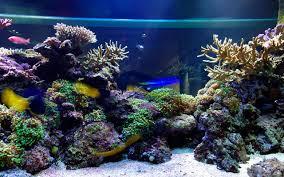 Tropical Fish Tank Wallpaper Glass Fish Tanks 1920x1080 491 49 Kb