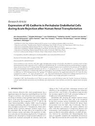 PDF) Expression of VE-Cadherin in Peritubular Endothelial Cells ...