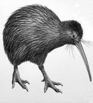 51 件のおすすめ画像ボードkiwi2016 鳥キーウィ