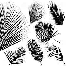Feuille De Palmier Palm Feuille Transparente Patron Illustration