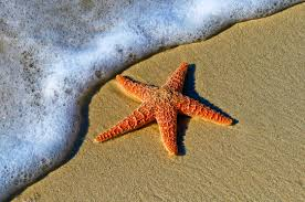 the starfish story katie steedly