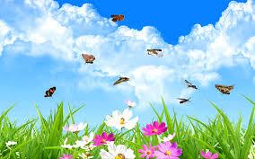 Картинки по запросу бабочки фото