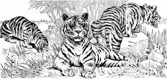 Small Picture Tiger Coloring Pages Free Simple Free Tiger Coloring Pages
