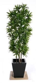 artificial plants for office decor. Artificial Plants. Privacy Plants For Office Decor