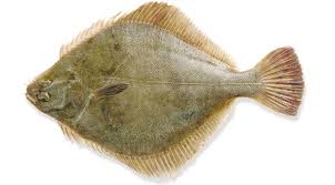 Image result for flounder