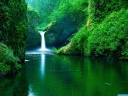 nature of beauty is whether beauty is subjective or objective green nature hd 312
