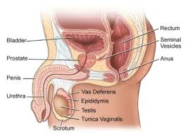 bladder infection causes