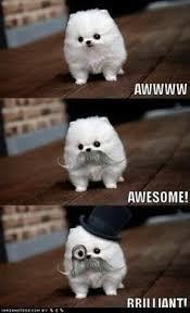 White fluffy dogs on Pinterest | Teacup Pomeranian Puppy ... via Relatably.com