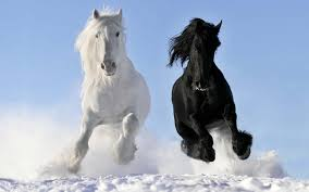 black mustang horse wallpaper. Contemporary Horse Images For U003e Wild Horses Wallpaper Intended Black Mustang Horse L