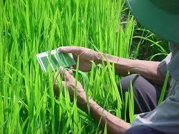 Leaf Color Chart For Sale Leaf Color Chart Irri Rice Knowledge Bank
