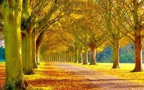 Beautiful scenery wallpaper ...