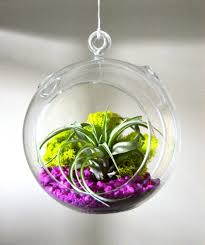 lovely sphere glass hanging plant terrarium ideas with purple pebble and colorful plant