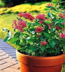 container garden plans. container flower garden ideas plant a butterfly magnet perennial plans i