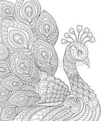 Peacock Coloring Page Stock Vektory Royalty Free Peacock Coloring