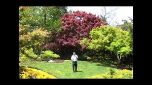 Small Picture Best Trees for Small Garden Spaces Japanese Maples YouTube