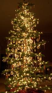 Napa Christmas Tree Lighting The Nicholls Christmas Tree A Holiday Staple