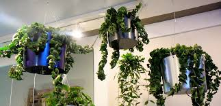 Fixing Indoor Climbing Plants To A Foam Or Moss Support  YouTubeClimbing Plants Indoor