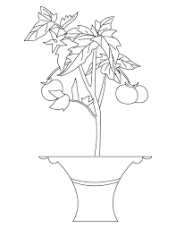 Small Picture Best tomato plant coloring page Download Free Best tomato plant