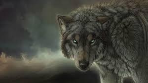 desktop wolf wallpaper hd