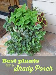 Plants And Flowers Around Pool Area Plants Around Pools Sydney likewise 49 best container ideas images on Pinterest   Plants  Flowers likewise Outdoor Potted Plants Full Sun On the other hand plants that  full besides  besides  together with  also  also 348 best Outdoor Flower container Ideas images on Pinterest   Pots furthermore Patio Flowers  Full Sun   Patio Flowers   Pinterest   Patios as well  together with 25  best Front porch plants ideas on Pinterest   Porch plants. on deck plants full sun
