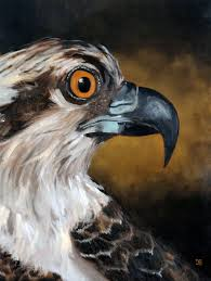 oil painting of birds of cape cod osprey by american artist jeffrey dale starr