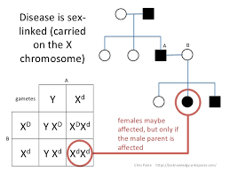 What Are Pedigree Charts Used For Idiots Guide To Analysing Pedigree Charts