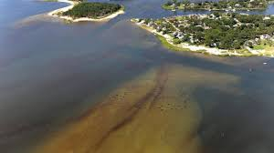 Long Island Can Turn The Ugly Tide Of Polluted Waters Newsday